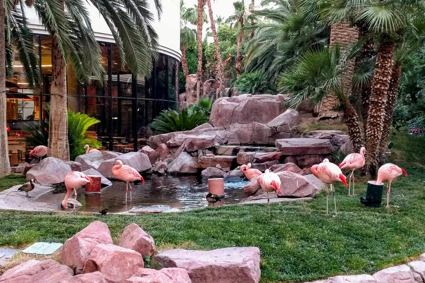 Flamingo Wildlife Habitat ; Courtesy of TripAdvisor traveler/ supertzar666