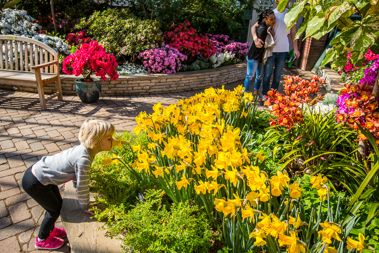 Go Gaga for the Greenery at Garfield Park Conservatory;Courtesy of Choose Chicago