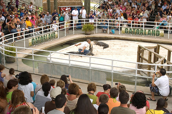 Gator wrestling at Gatorland
