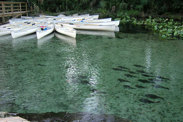 Canoe area at Wekiwa Springs State Park