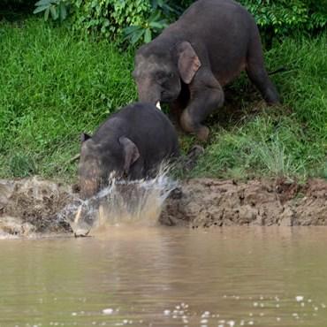 la giungla del Borneo