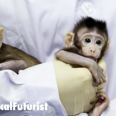 World first as Chinese scientists clone two monkeys, raising fears humans could be next