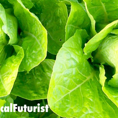 US startup secures $200m in funding to build 300 vertical farms across China