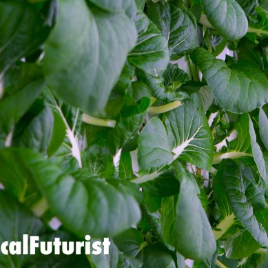 Vertical farms edge closer to disrupting traditional agriculture