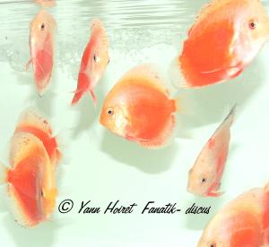 Photo discus white red valentine