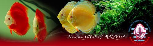 Logo Discus society Malaysia