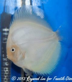 Aquarama 2013 Class 9 Discus solid open 02_1