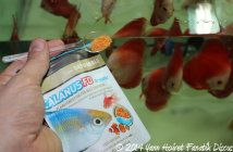Calanus FD Organic Dennerle for Discus fry
