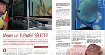 Mener un élevage sélectif de discus AQUAMAG 35