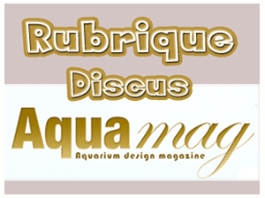 AquaMag Fanatic-Discus