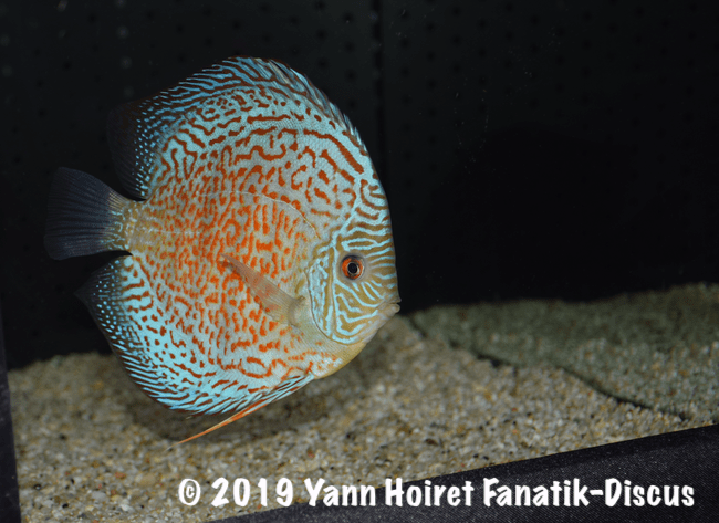 3RD open vivarium 2018 Discus friends show
