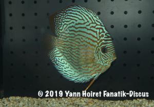 3RD pattern vivarium 2018 De discusvrienden show