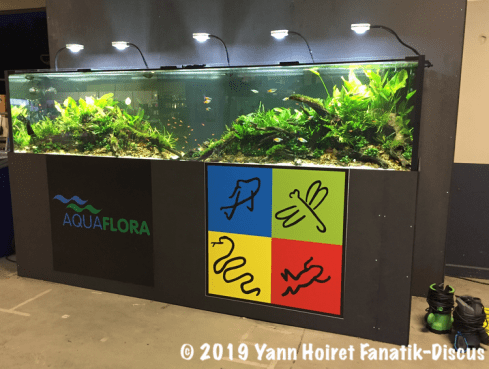 40 plants an aquarium vivarium 2018