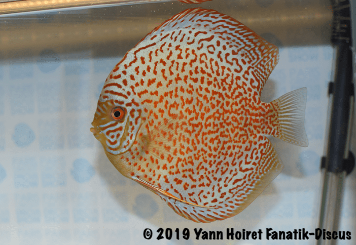 2 ND large spots Meeting discus Paris Discus show 2019