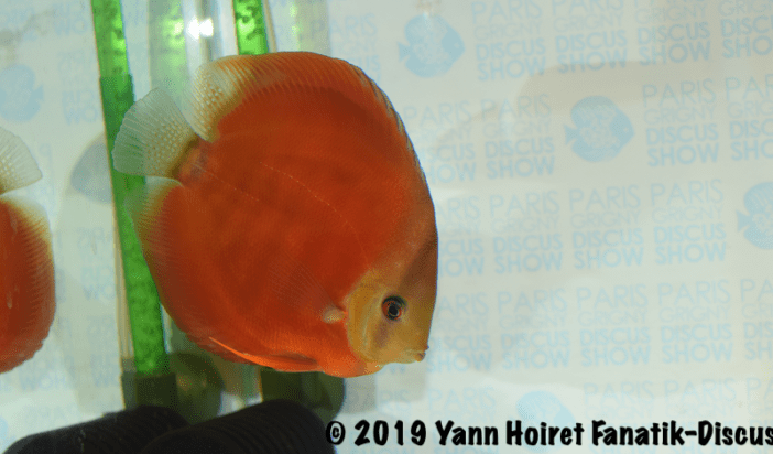 3RD red meeting discus de Paris Discus show 2019