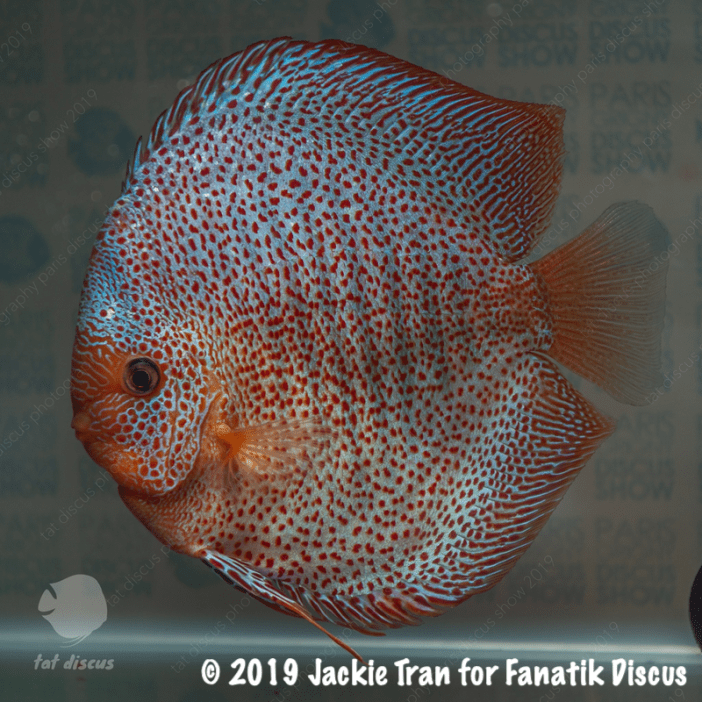 3rd fine pattern red spotted snake skin meeting discus Paris 2019