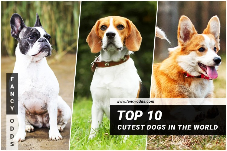 Top 10 Cutest Dogs In The World