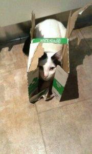 ¡Las cajas les vuelven locos! son juguetes gratis para gatos muy económicos.
