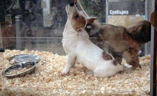 Si quieres comprar un cachorro, seguramente los veas tras estas cristaleras.