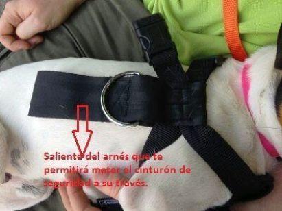 El saliente del arnés es de vital importancia para tu perro. A través de él podrás pasar el cinturón de seguridad.