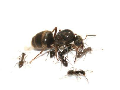 Un hormiguero en casa, cuidados básicos 2