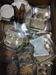 Caja de alimento vivo recién llegada al establecimiento.