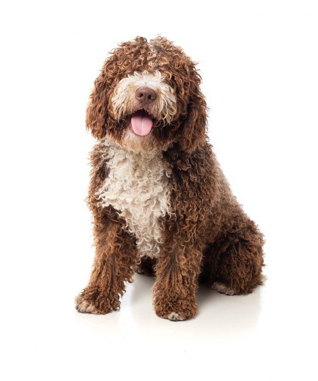 """En tu comercio especializado puedes encontrar incluso juguetes para peludos que les encanta el agua, así se entretendrá si el perro come sus cacas. Está bien educado, entretenido y bien alimentado. Autor: <a href=""""http://www.freepik.es/fotos-vectores-gratis/perro"""">Perro de fotografía creado por Kues1 - Freepik.com</a>"""