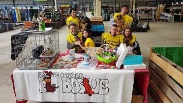 dopción de perros voluntarios