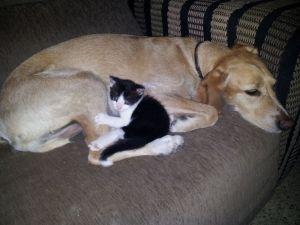 Dormir con una mascota