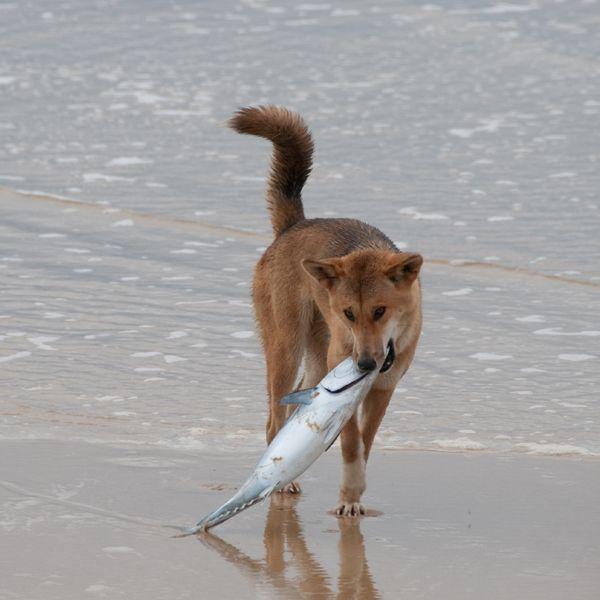 Perro comiendo pescado