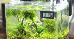 bajar temperatura del acuario