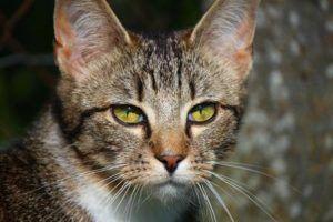 Primera consulta veterinaria gato encerrado
