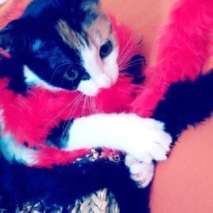 Ventajas de castrar una gata