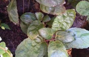 planta facil para acuaterrario