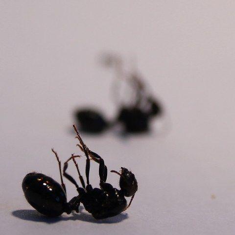 Pogonas reproduccion asexual de las plantas