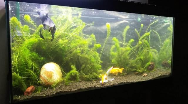 Filtro de acuario ruidoso de agua fría
