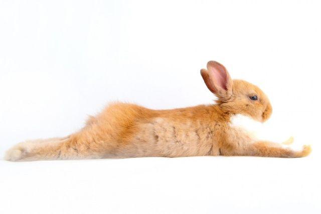Explicar cómo curar la coccidiosis en conejos