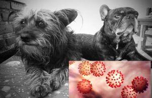 coronavirus y mascotas explicar su relación