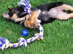 Como hacer que el aprendizaje del cachorro sea más rapido