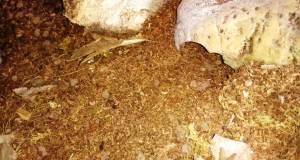Fibra de coco en el sustrato del terrario