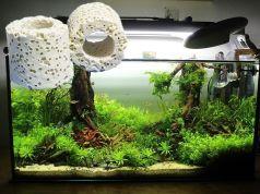 Canutillos cerámicos para un acuario, cual comprar
