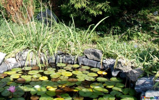 Como eliminar algas del estanque de manera barata