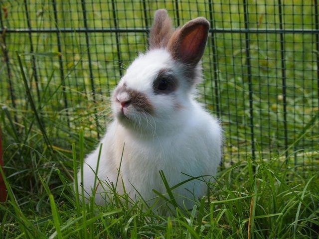 Explicar cómo son los parques para conejos