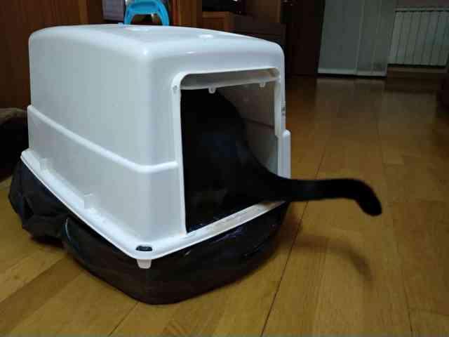 Cual es el mejor arenero para gato