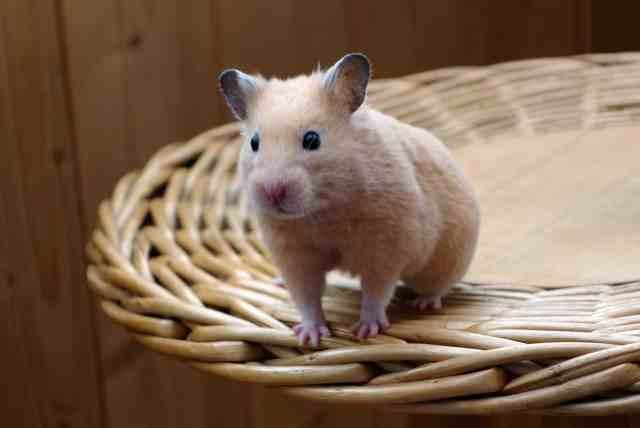 regalos de navidad para hamster