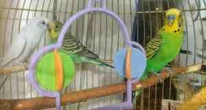lechos higiénicos para pájaros, periquitos