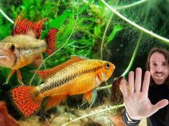 Peces de acuario bonitos