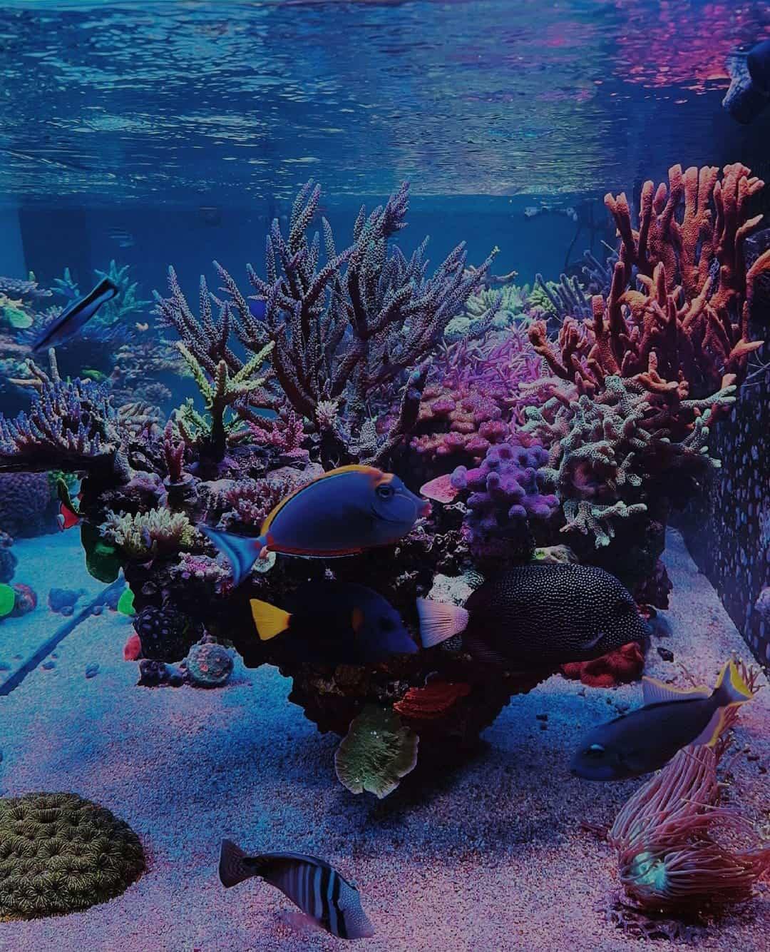 agua cristalina en acuario marino