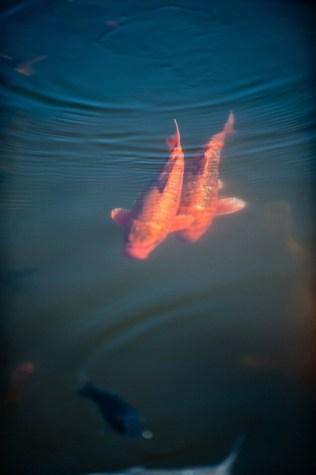 poissons_flous_temple-2