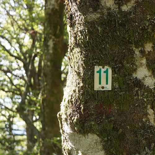 Chiffre 11 Forêt